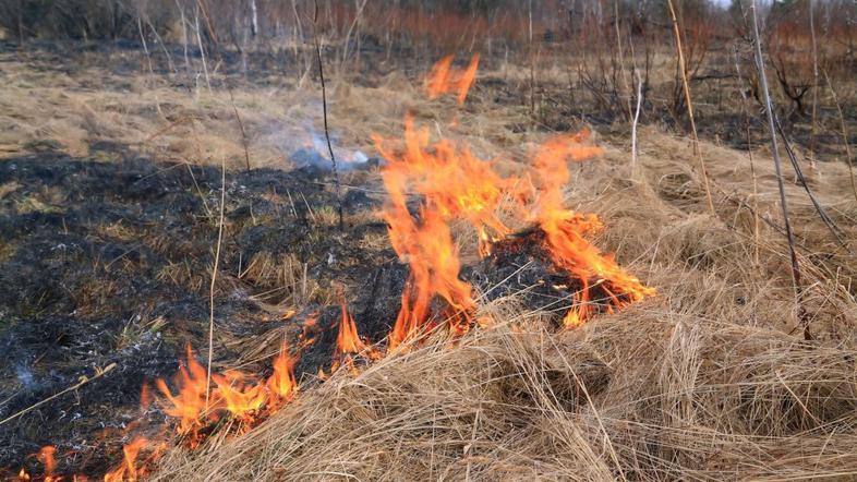 Požar nad Žapužami!