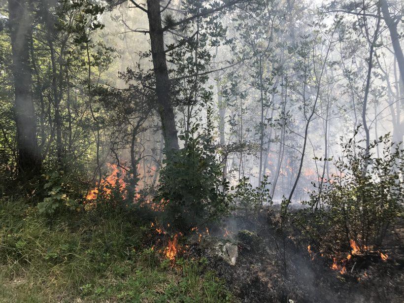 Požar v naravi